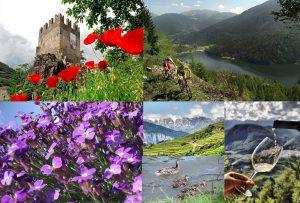 estate-da-vivere-altopiano-di-pinè-e-valle-di-cembra